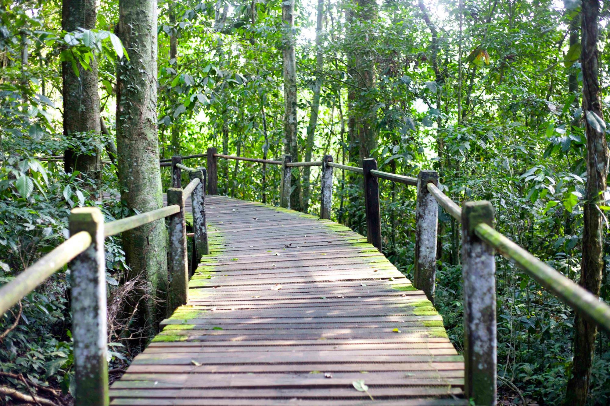 Travel in the Amazon Rainforest | Gondwana Ecotours