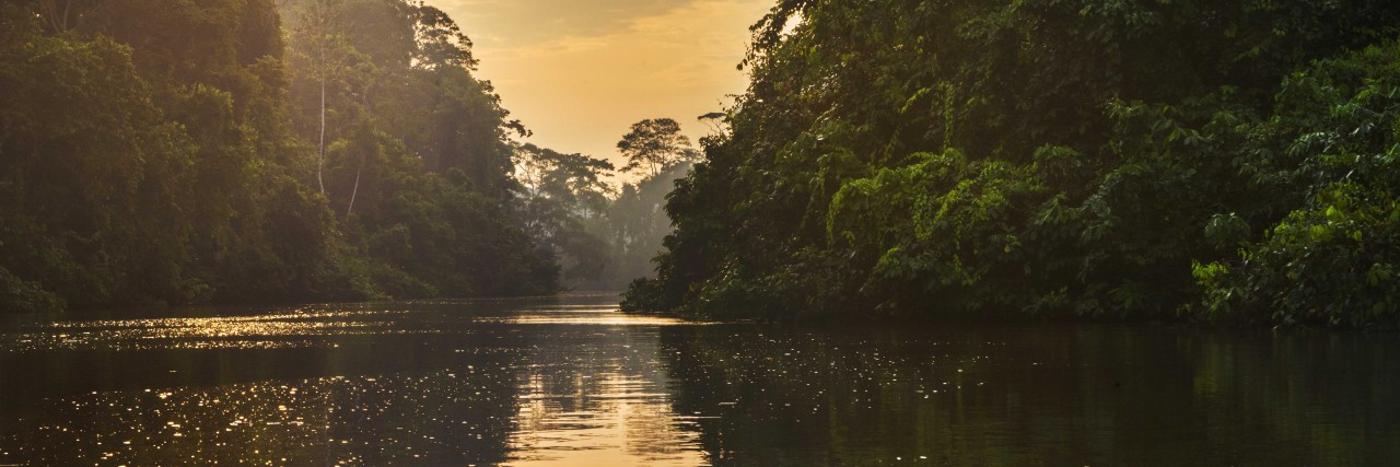 Travel in Ecuador - In the Amazon Rainforest