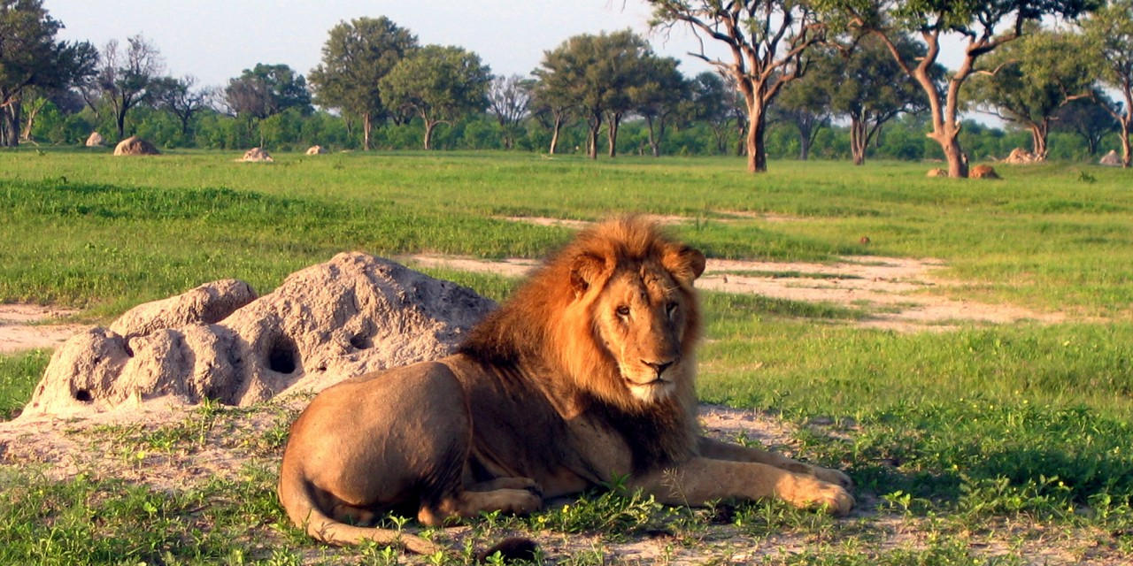 Wildlife at Hwange Park