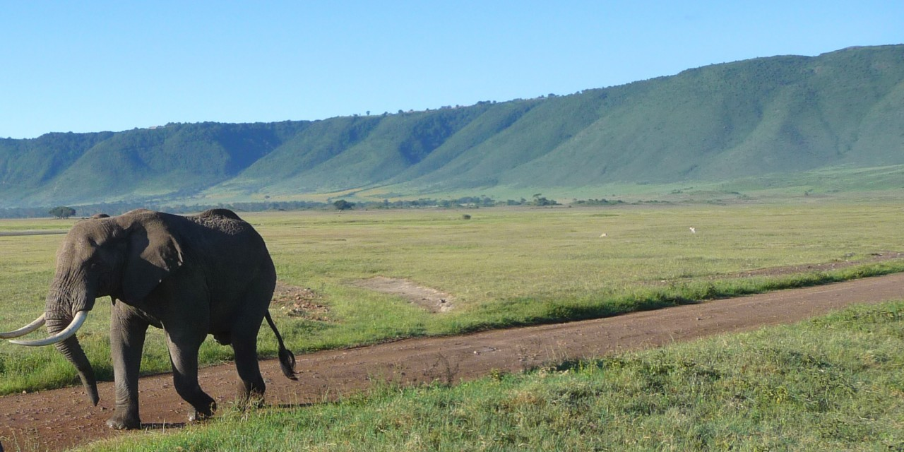 Wildlife in Ngorongoro