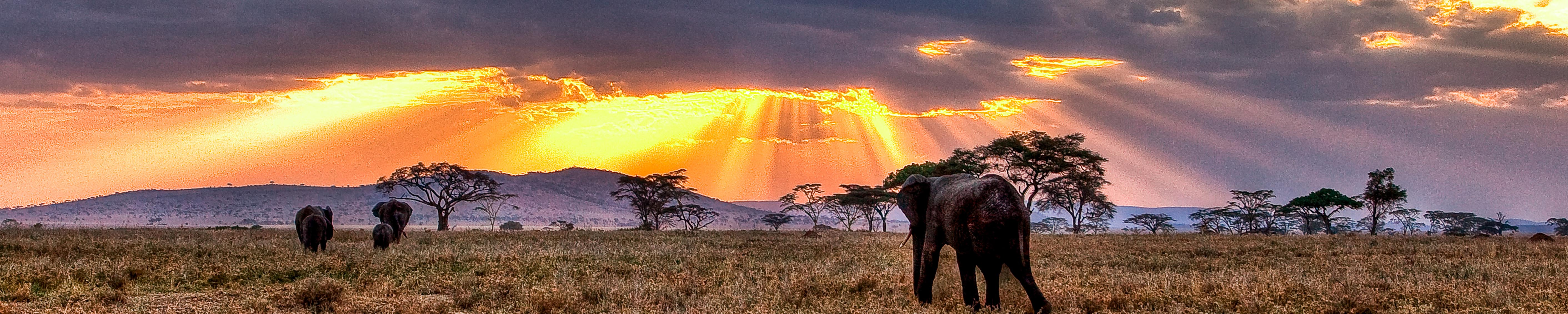 Safari with Elephants