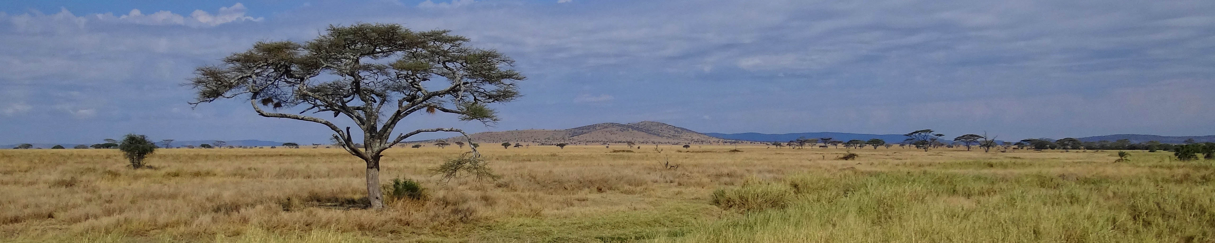 East Africa - Serengeti