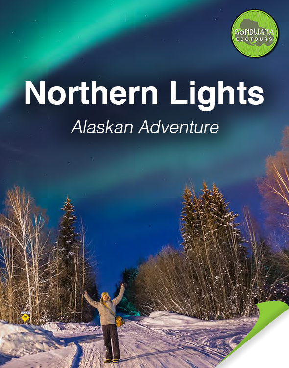 travel to see the northern lights in fairbanks alsaka