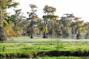 Cajun Tour Swamp