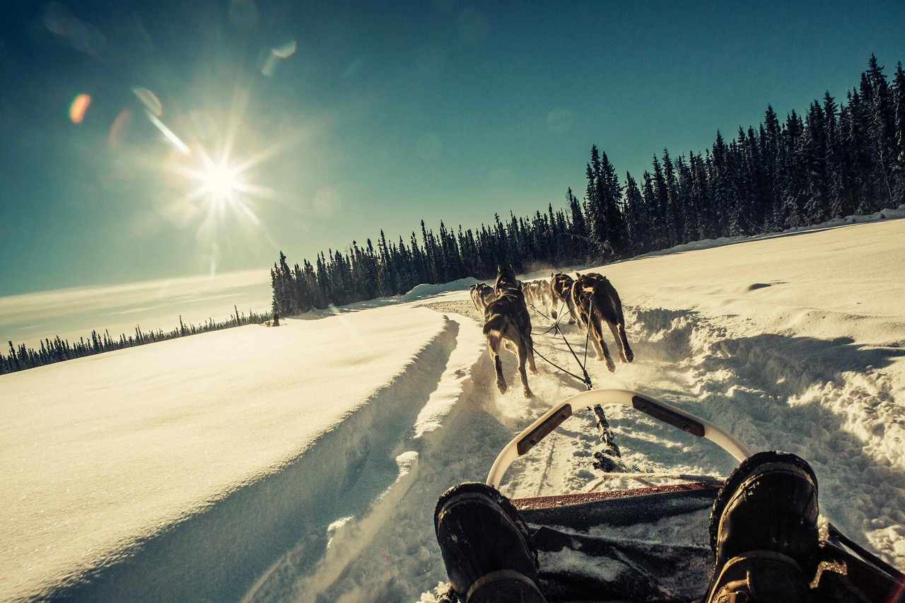 alaska aurora dogsledding