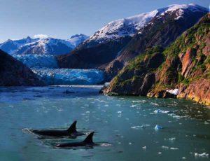Whales in Alaska's Kenai Fjords