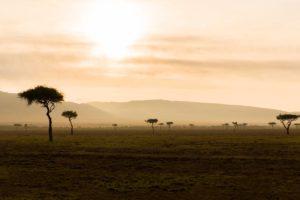 Acacia trees in Masai Mara National Park