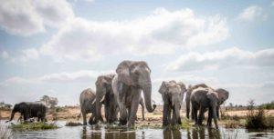 Herd of elephants drinking in Tarangire National Park