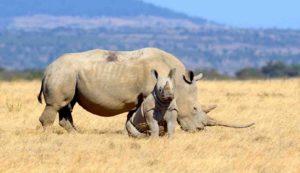 Rhino in Ngorongoro National Park