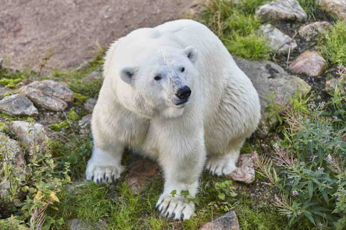 Image of a polar bear sitting in a field