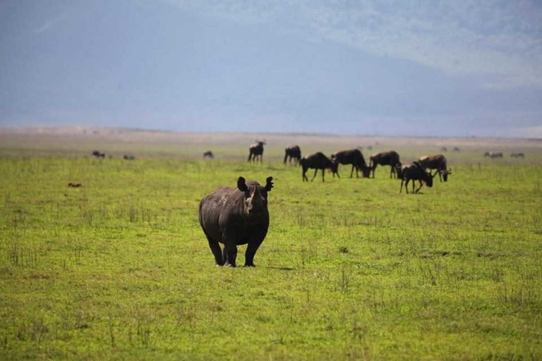 Rhino in the Ngorongoro Crater