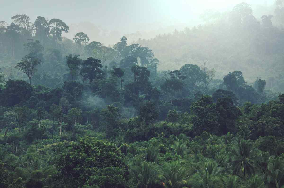 Photo of the Amazon Rainforest