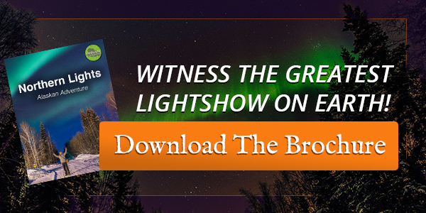 see the northern lights trips