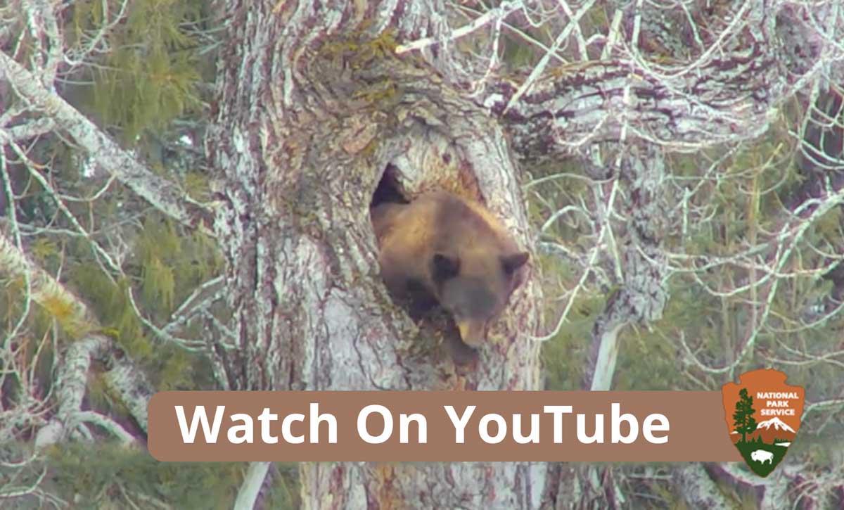 live bear cam in alaska