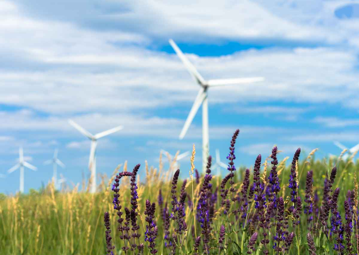 "Photo of a field of flowers with wind turbines in the background for the article, ""A Quick Guide to Carbon Offsets"" from Gondwana Ecotours"