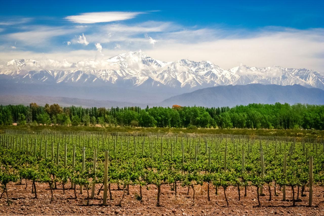 Vineyards near Mendoza in Argentina
