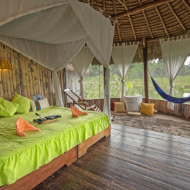 Experience the Amazon Rainforest in comfort & safety