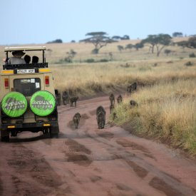 Wildlife viewing in the Serengeti