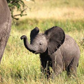 A baby elephant in the Serengeti