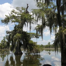 Lake Martin swamp tours