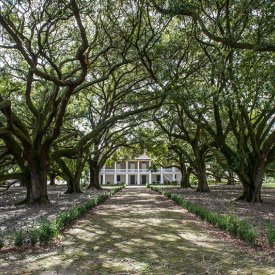 Live Oaks & Historic Mansion