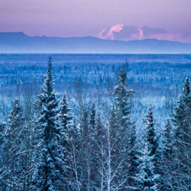 Boreal Forests Surround Fairbanks