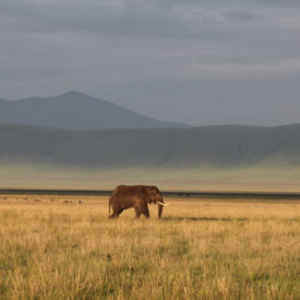 An elephant basks in the light in the Ngorongoro Crater