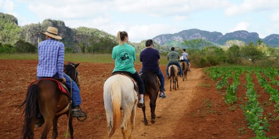 Horseback ride across tobacco plantations and coffee farms through a beautiful valley